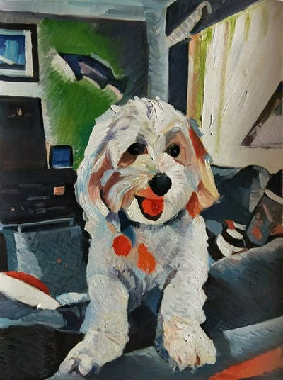 A painting of dog, dog like mammal, dog breed, vertebrate, dog breed group, maltese, dog crossbreeds, poodle crossbreed, goldendoodle, cavachon