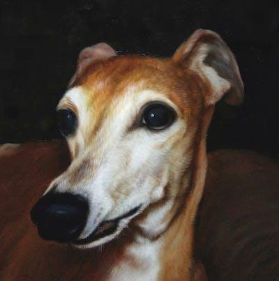 A painting of dog, dog breed, dog like mammal, snout, italian greyhound, sighthound, longdog, whiskers, whippet, greyhound