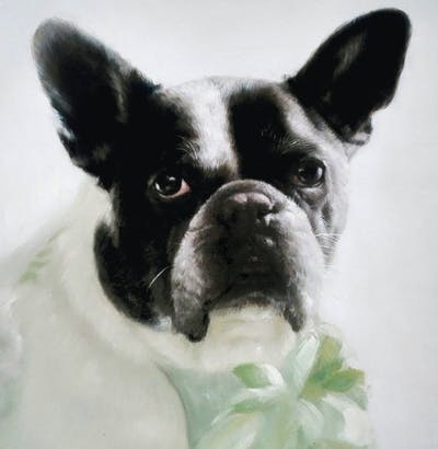 A painting of dog, dog like mammal, dog breed, vertebrate, french bulldog, bulldog, toy bulldog, snout, carnivoran, olde english bulldogge