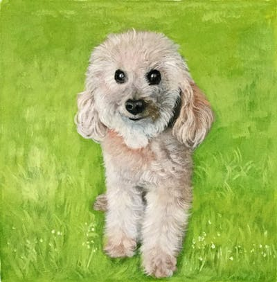 A painting of dog breed, dog like mammal, dog, standard poodle, poodle, miniature poodle, grass, goldendoodle, snout, water dog