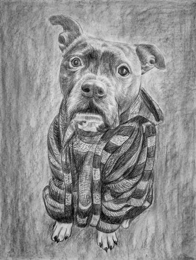 A painting of dog, dog breed, dog like mammal, snout, carnivoran, dog crossbreeds, american pit bull terrier, staffordshire bull terrier