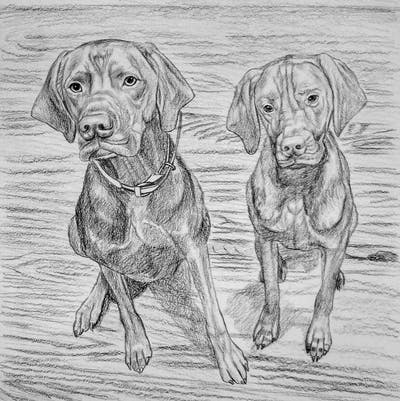 A painting of dog, mammal, dog like mammal, dog breed, vizsla, carnivoran, snout, irish setter, wood, pointing breed
