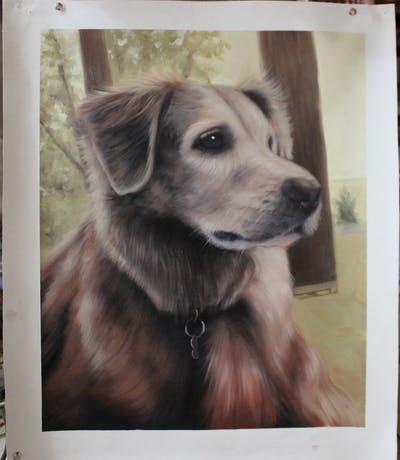 A painting of dog, dog breed, nose, dog like mammal, snout, retriever, golden retriever, whiskers, labrador retriever, sporting group