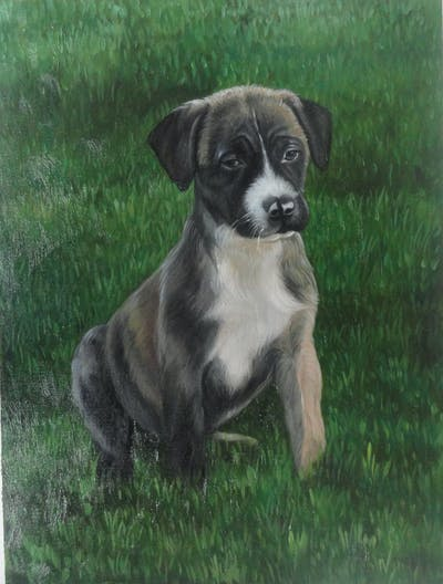 A painting of dog breed, dog, dog breed group, dog like mammal, snout, dog crossbreeds, grass, companion dog, carnivoran, sporting group