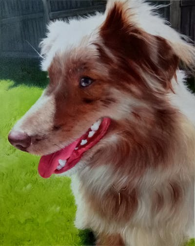 A painting of dog, dog breed, dog breed group, dog like mammal, snout, australian shepherd, companion dog, miniature australian shepherd, koolie, rare breed dog