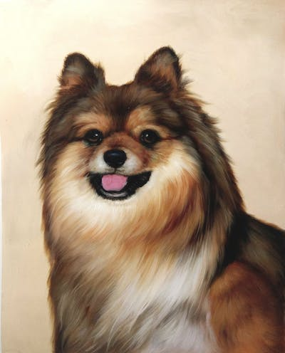 A painting of dog, dog like mammal, dog breed, german spitz, german spitz klein, german spitz mittel, pomeranian, dog breed group, volpino italiano, carnivoran