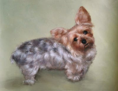 A painting of dog, dog like mammal, dog breed, mammal, yorkshire terrier, australian silky terrier, vertebrate, terrier, carnivoran, dog breed group