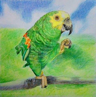 A painting of parrot, bird, fauna, beak, parakeet, common pet parakeet, macaw, lorikeet, cage, perico