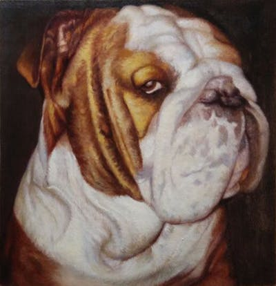 A painting of dog, dog like mammal, dog breed, vertebrate, bulldog, nose, snout, toy bulldog, british bulldogs, carnivoran