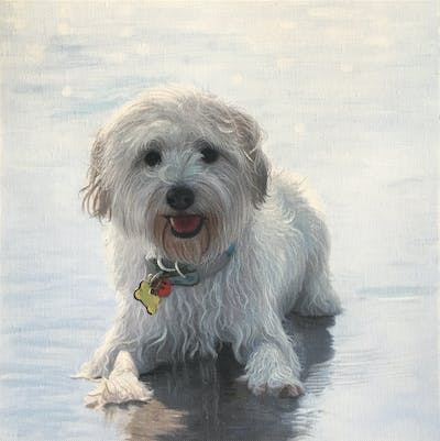 A painting of dog, dog like mammal, dog breed, snout, sapsali, dog crossbreeds, snow, schnoodle, dandie dinmont terrier, glen of imaal terrier