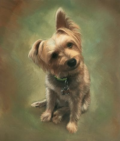 A painting of dog, dog breed, dog like mammal, terrier, australian silky terrier, dog breed group, yorkshire terrier, morkie, norfolk terrier, snout