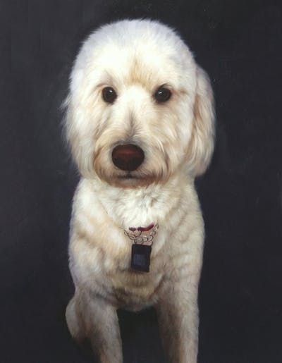 A painting of dog, dog like mammal, dog breed, miniature poodle, dog breed group, goldendoodle, standard poodle, dog crossbreeds, toy poodle, poodle