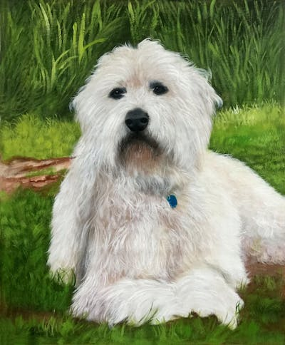A painting of dog, dog like mammal, dog breed, sapsali, dutch smoushond, dog breed group, goldendoodle, terrier, coton de tulear, irish soft coated wheaten terrier
