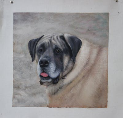 A painting of dog, dog like mammal, mammal, dog breed, snout, boerboel, carnivoran, dog breed group, whiskers, guard dog