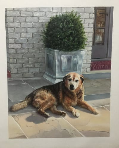 A painting of dog, dog like mammal, street dog, dog breed, dog breed group, snout, golden retriever, sporting group, window, retriever