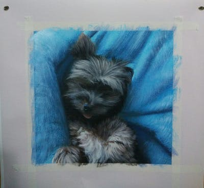 A painting of dog, dog like mammal, dog breed, morkie, schnoodle, terrier, dog breed group, puppy, yorkshire terrier, dog crossbreeds