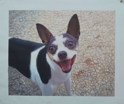 A painting of dog breed, dog, dog like mammal, rat terrier, dog breed group, snout, miniature fox terrier, chihuahua, tenterfield terrier, feist
