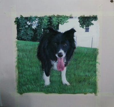 A painting of dog, dog like mammal, dog breed, dog breed group, border collie, karelian bear dog, grass, herding dog, plant