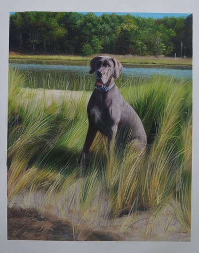 A painting of dog, dog breed, dog like mammal, grass, plant, greyhound, weimaraner, great dane, sloughi, sporting group