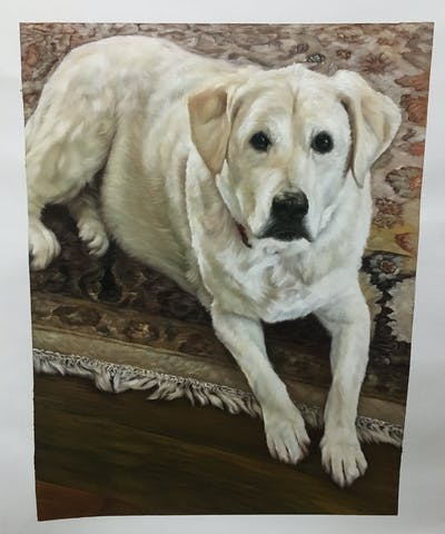 A painting of dog, dog breed, labrador retriever, dog like mammal, dog breed group, retriever, snout, companion dog, sporting group, akbash dog