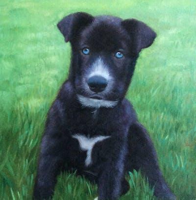A painting of dog, dog like mammal, dog breed, dog breed group, borador, puppy, snout, karelian bear dog, carnivoran, rare breed dog