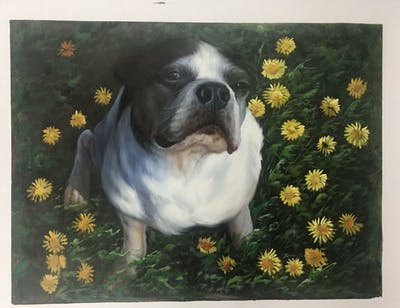 A painting of dog, dog breed, dog like mammal, dog breed group, toy bulldog, snout, boston terrier, carnivoran, bulldog, companion dog