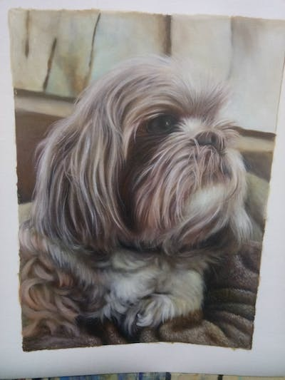A painting of dog, dog breed, dog like mammal, shih tzu, snout, dog breed group, fur, carnivoran, lhasa apso, companion dog