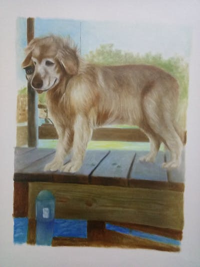 A painting of dog, dog like mammal, dog breed, dog breed group, golden retriever, retriever, snout, nova scotia duck tolling retriever, dog crossbreeds, companion dog