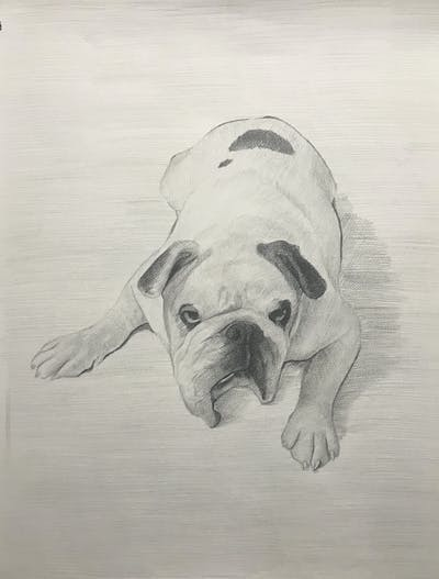 A painting of dog, dog like mammal, dog breed, mammal, vertebrate, pug, dog breed group, toy bulldog, bulldog, old english bulldog