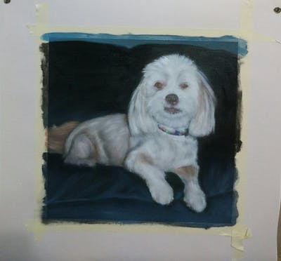 A painting of dog like mammal, dog, dog breed, dog crossbreeds, dog breed group, cavachon, poodle crossbreed, cockapoo, havanese, spaniel