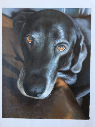 A painting of dog, dog breed, dog like mammal, borador, snout, dog crossbreeds, labrador retriever, dog breed group, patterdale terrier, sporting group
