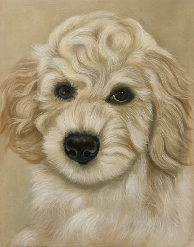 A painting of dog, dog like mammal, dog breed, goldendoodle, dog crossbreeds, schnoodle, poodle crossbreed, miniature poodle, snout, cockapoo