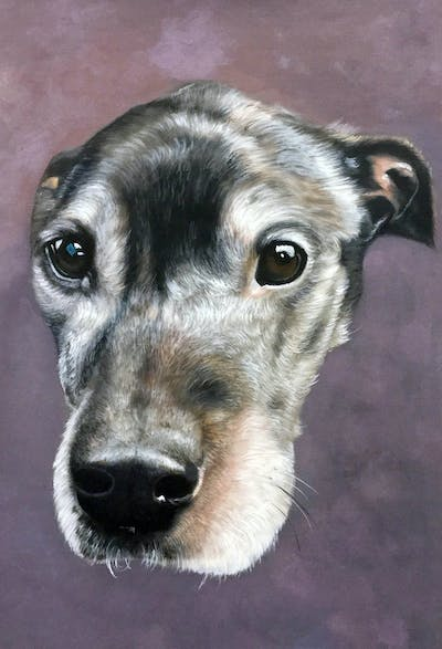 A painting of dog, dog breed, nose, snout, dog like mammal, whiskers, dog crossbreeds, greyhound, dog breed group
