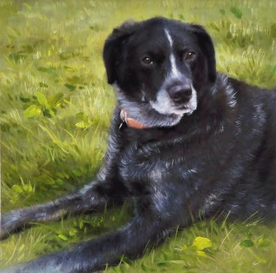 A painting of dog, dog breed, borador, dog like mammal, dog breed group, labrador retriever, snout, sporting group, retriever, hunting dog