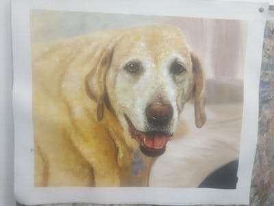 A painting of dog, dog breed, labrador retriever, snout, retriever, dog like mammal, companion dog, sporting group, golden retriever, whiskers