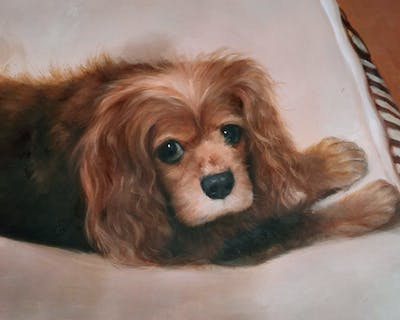 A painting of dog, dog breed, dog like mammal, spaniel, dog breed group, dog crossbreeds, american cocker spaniel, snout, english cocker spaniel, carnivoran