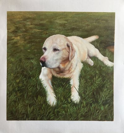 A painting of dog, dog breed, retriever, dog like mammal, golden retriever, dog breed group, labrador retriever, sporting group, snout, companion dog