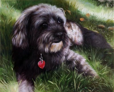 A painting of dog breed, dog like mammal, dog, schnoodle, dog crossbreeds, cockapoo, tibetan terrier, poodle crossbreed, schapendoes, wirehaired pointing griffon