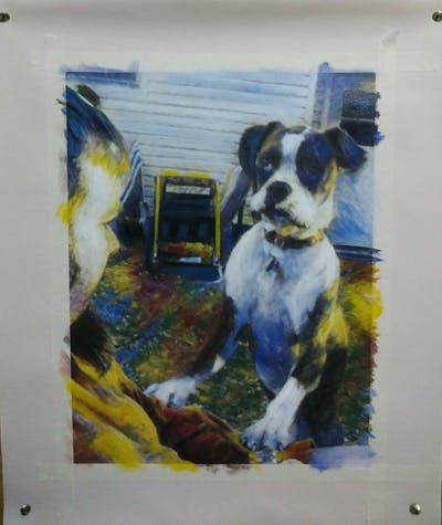 A painting of dog, dog breed, vertebrate, dog like mammal, boxer, snout, dog breed group, dog crossbreeds, carnivoran, american bulldog