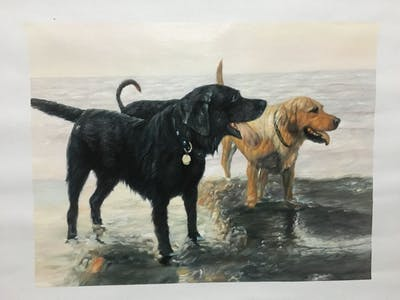 A painting of dog, dog like mammal, dog breed, labrador retriever, retriever, snout, sporting group, carnivoran, flat coated retriever, dog walking
