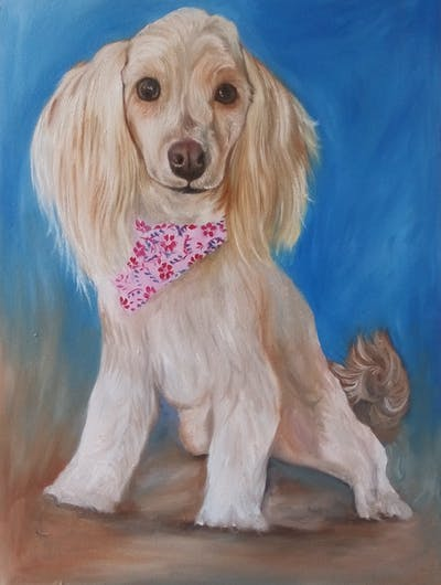 A painting of dog, dog like mammal, dog breed, dog breed group, miniature poodle, poodle, dog crossbreeds, toy poodle, snout, water dog