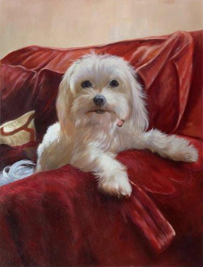 A painting of dog, dog like mammal, dog breed, maltese, dog breed group, cavachon, dog crossbreeds, havanese, lhasa apso, cockapoo