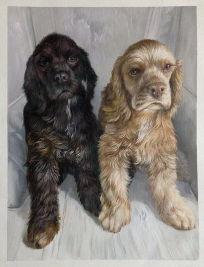 A painting of dog like mammal, dog, dog breed, spaniel, dog crossbreeds, american cocker spaniel, cockapoo, field spaniel, english cocker spaniel, dog breed group