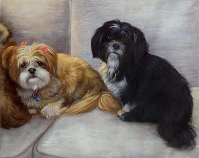 A painting of dog, dog like mammal, dog breed, dog breed group, lhasa apso, shih tzu, dog crossbreeds, carnivoran, snout, havanese