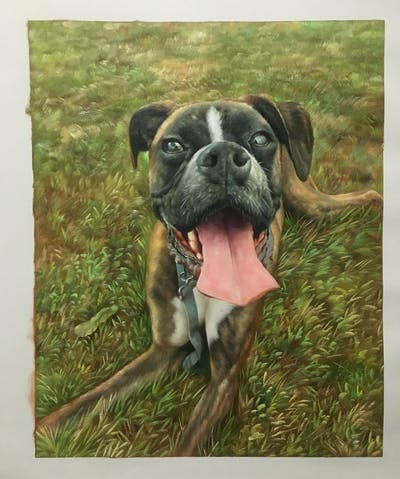 A painting of dog, dog breed, dog like mammal, boxer, snout, dog breed group, valley bulldog, olde english bulldogge, grass, australian bulldog