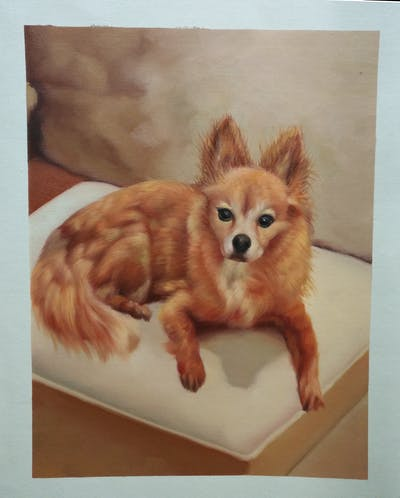 A painting of dog, dog like mammal, dog breed, pomeranian, dog breed group, german spitz, german spitz klein, carnivoran, snout, volpino italiano