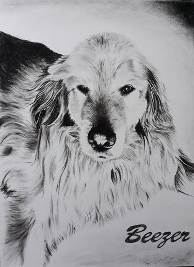 A painting of dog, golden retriever, dog breed, dog like mammal, retriever, dog breed group, snout, fur, dog crossbreeds, whiskers
