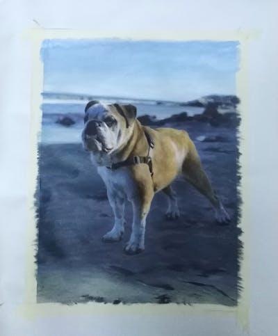 A painting of dog, dog like mammal, dog breed, bulldog, dog breed group, snout, beach, olde english bulldogge, sand, carnivoran