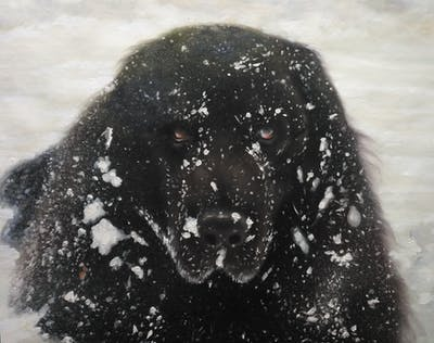 A painting of black, dog like mammal, dog, snow, freezing, snout, winter, black and white, water, carnivoran
