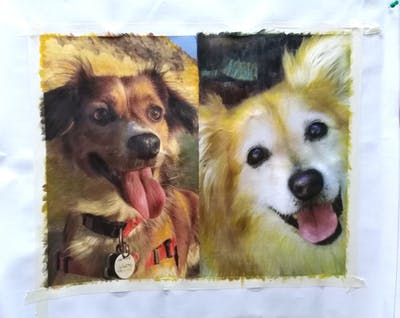 A painting of dog, dog like mammal, dog breed, pomeranian, dog breed group, german spitz klein, german spitz, snout, puppy, whiskers